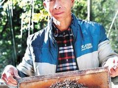 养蜂人依托电商走上致富路:蜂农收入都在翻倍