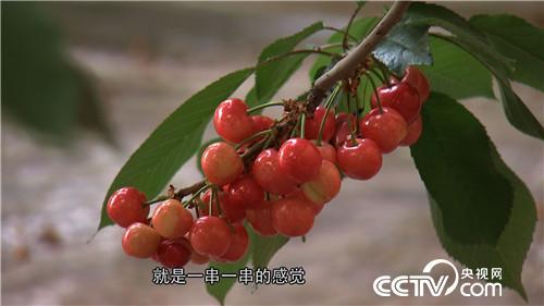 致富经:他拿北京上亿房产换樱桃(20170424)