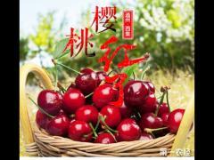 恋爱樱:樱桃界的爱马仕
