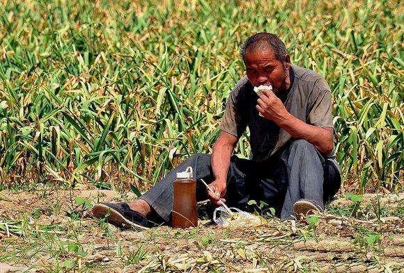 未来10年,中国的农民还有土地种吗?
