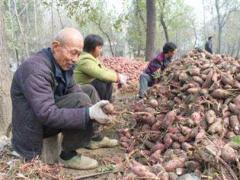 现在农村做什么赚钱 五个农村致富新项目推荐