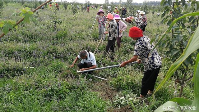 在农村种地,月薪10000元有人干吗?