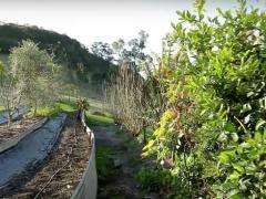 国外流行一种永久性农场,12亩地可以供应50户家庭!