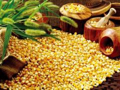 从今年开始黄淮海夏播区也不让种玉米了,看看你所在地区中招了吗?