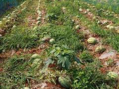 """捣心的农产品总是""""滞销"""",老商贩道出了其中的隐情!"""