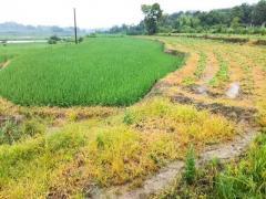 浅谈现代农业的现状