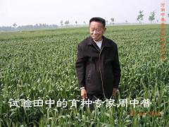 周中普--彩色小麦育种专家