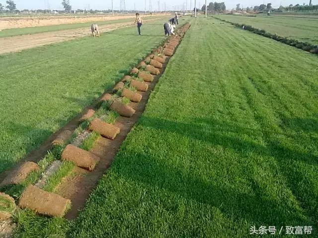 种草也能年产值近亿元?销售有技巧!