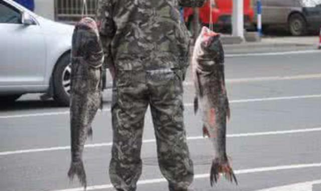 农村养殖这几种鱼,回报率最高!而且养殖技术简单,周期短!