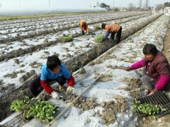 农村土地承包到期后,会进行二轮承包了?2028年这些人或将没有土地了