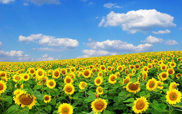 做农业不懂这五点,光靠情怀分分钟能让你赔个精光