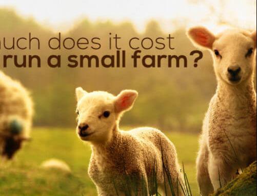一个美国农民纪录他经营一家小型农场的花费,成本低得惊人