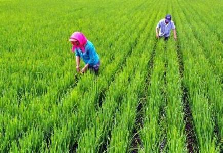 农业<a href=https://www.zhifujing.org/gushi/ target=_blank class=infotextkey>创业</a>几个案例惨败原因