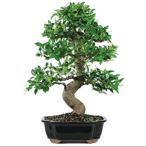 美国农民盘点出最能赚钱的9种树,中国农民也能种植