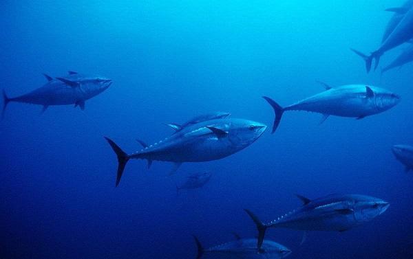 世界10大最昂贵的海鲜,养殖有难度但是利润高