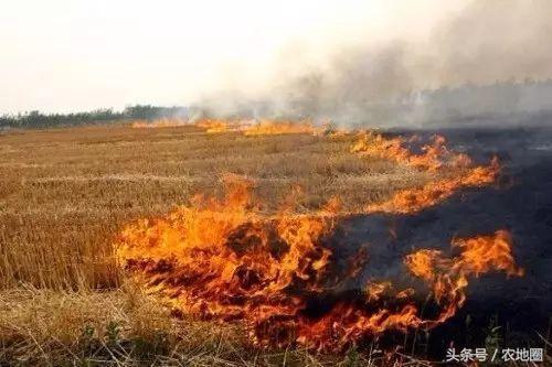 说10年后农业必火的,过来自扇耳光吧!