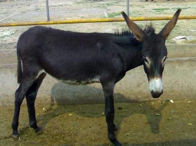 这10种经济动物最好饲养,而且利润高,中国农民千万别错过!