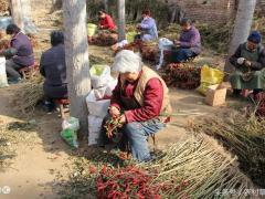 秋收以后农民就没事做了,教你几个在冬闲是赚钱的小项目
