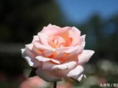 """种花却不卖花,""""沙漠玫瑰""""产业链多点开花"""