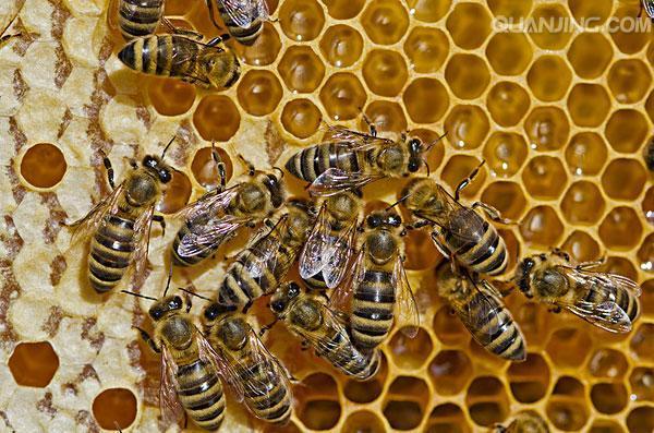 盘点中国10大资源昆虫,许多农民靠养虫子盖起新房开上轿车