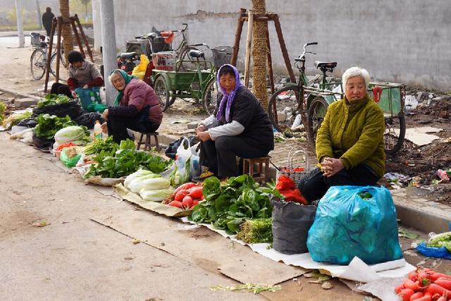 在家种植无公害蔬菜,不出门就能把钱赚