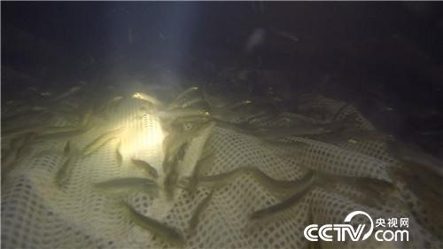 致富经:一斤泥鳅卖出325元的财富秘密(20170915)