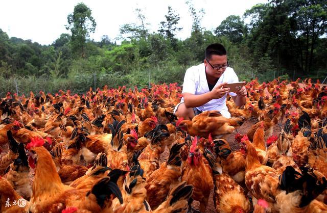 在农村,发展种养殖业,产品可以通过哪些方式销售出去?