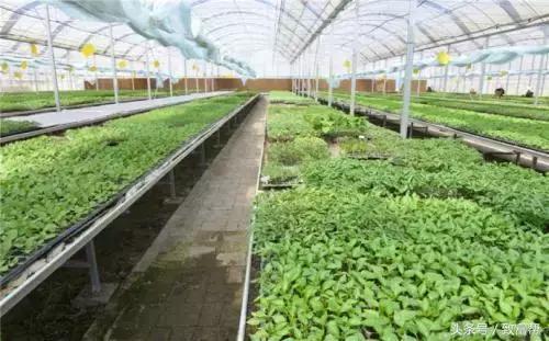 财富农观察|未来十年,有机农业原来有这么多赚钱机会!