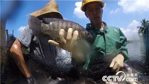 致富经:渔夫会武术 赚钱有招数(20170925)