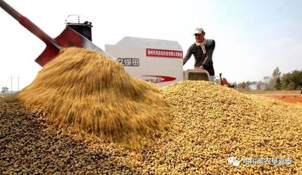 2017年影响新季水稻价格的主要因素是什么?附最近全国各地水稻价格!