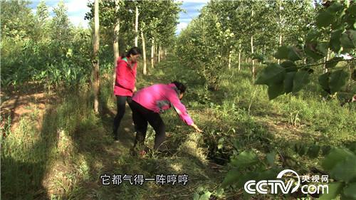 致富经:62岁马大姐骑马溜猪 逗乐来财(20170928)
