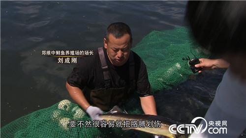致富经:古老大鱼 肚里生金(20179827)