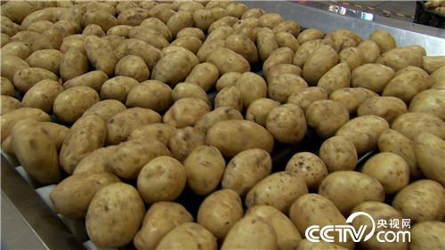 致富经:土里挖出金蛋蛋 一年卖出2000万(20171011)