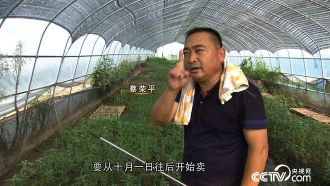致富经:蔡疯子养蛙 千万财富全靠挖(20171009)