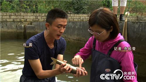 致富经:一公斤鱼365元 稀奇鱼卖出稀罕价(20171031)