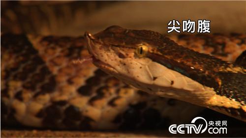 致富经:美女爱毒蛇 财富山里来(20171130)