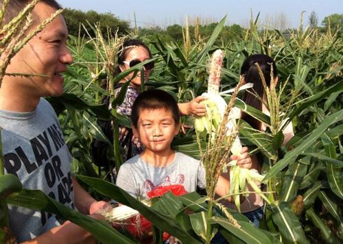 手机直播销售农产品