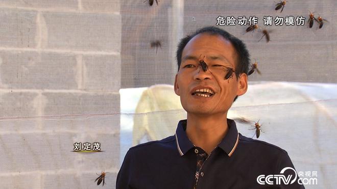 我和杀人蜂的60天