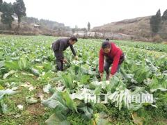 """80后""""蔬菜大王"""",带领村民共致富"""