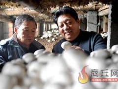 菇农致富领路人 ――记河南省十大扶贫人物张艳军