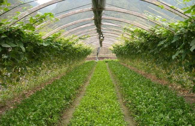 2019年大棚種植什么最賺錢?