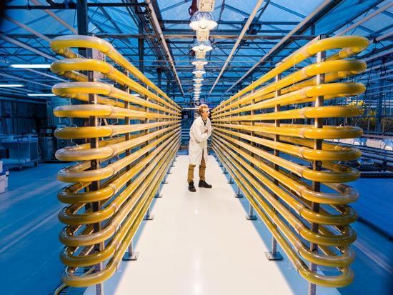 国土只有中国1/250的荷兰农业技术先进的可怕,全世界都惊讶!