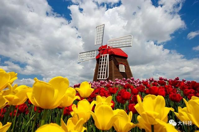 荷兰:小国土,大农业