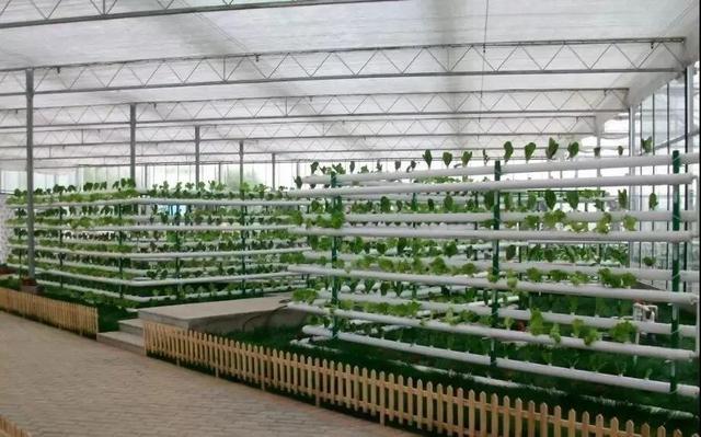这就是现代农业,让人震撼!