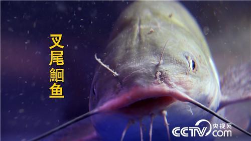 [致富经]二百多名渔民争着跟他养鱼 凭啥? 20180913