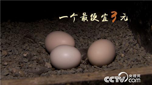 [致富经]退休校长养飞鸡 一枚蛋卖9.9元 20181107