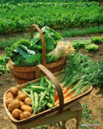 你知道每个月份,都能栽种什么蔬菜呢?建议收藏!