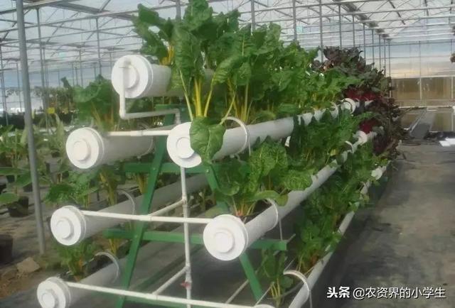这才是真正的现代农业,太震撼了!