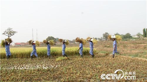 [致富经]我们在非洲种水稻 20190408