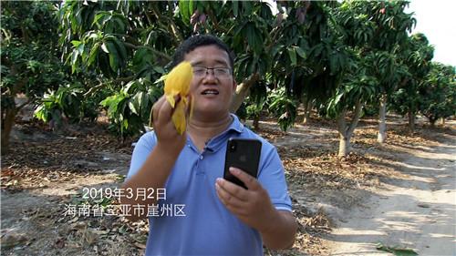 [致富经]树上多长20天 果子卖出4倍价 凭啥 20190418